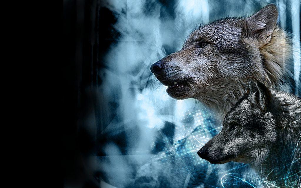 fondos de pantalla hd para pc lobo