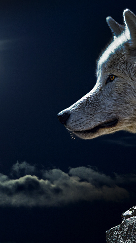 Fondos de pantalla de indios y lobos fondos de pantalla for Imagenes wallpaper hd para celular