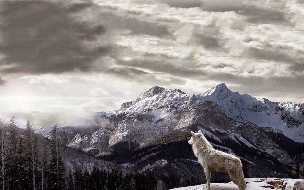 fondos de pantalla hd 1366x768 lobos
