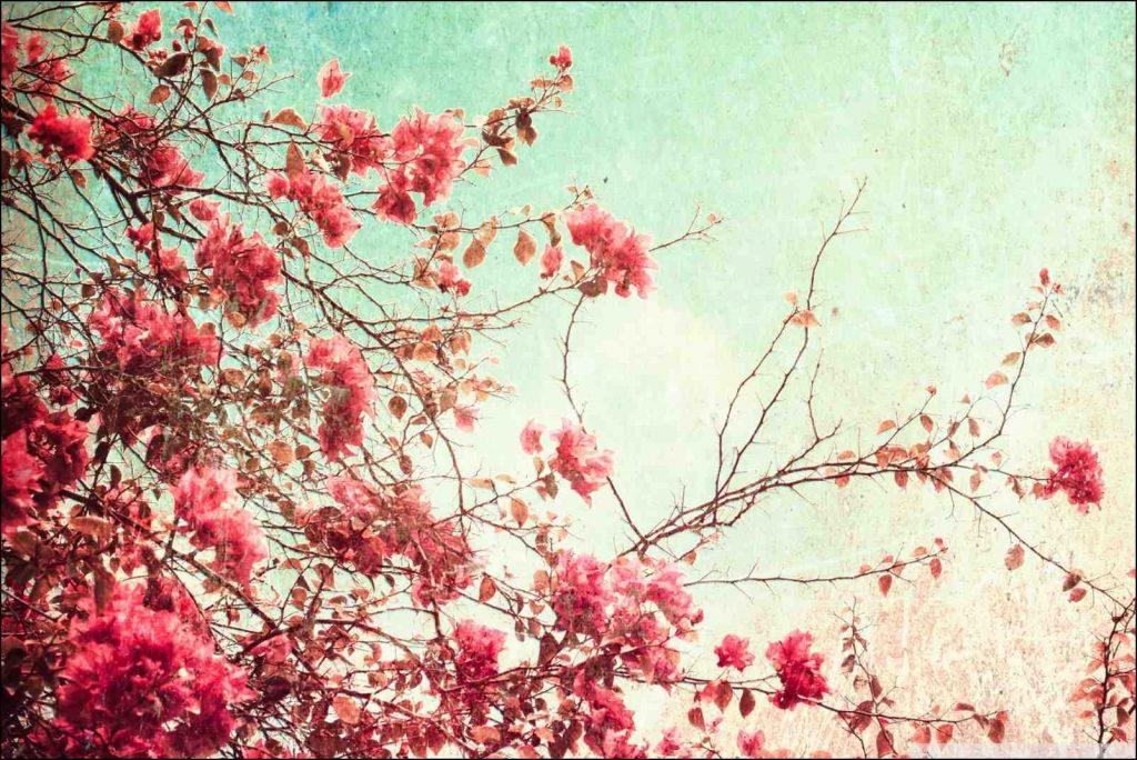 fondos vintage flores hd
