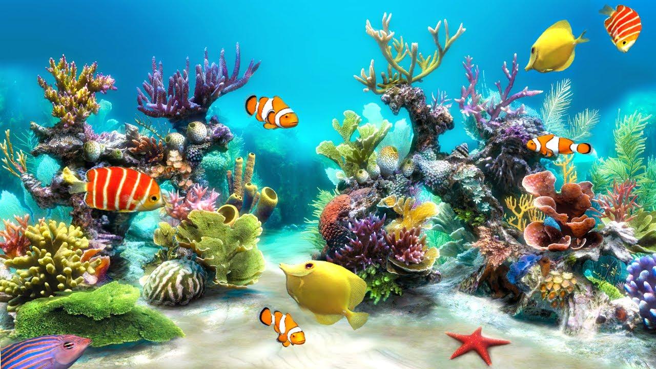 Los mejores 27 wallpapers 3d gratis fondos de pantalla for Bajar fondos de pantalla movibles