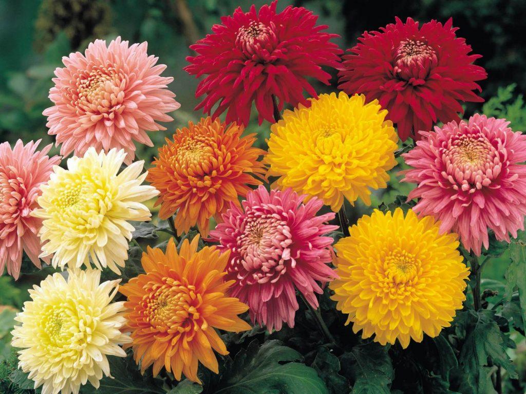 arranjo de flores com crisantemo