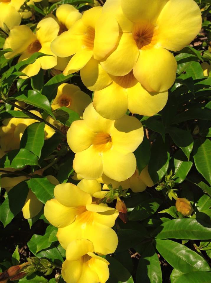 imagenes de flores campanillas