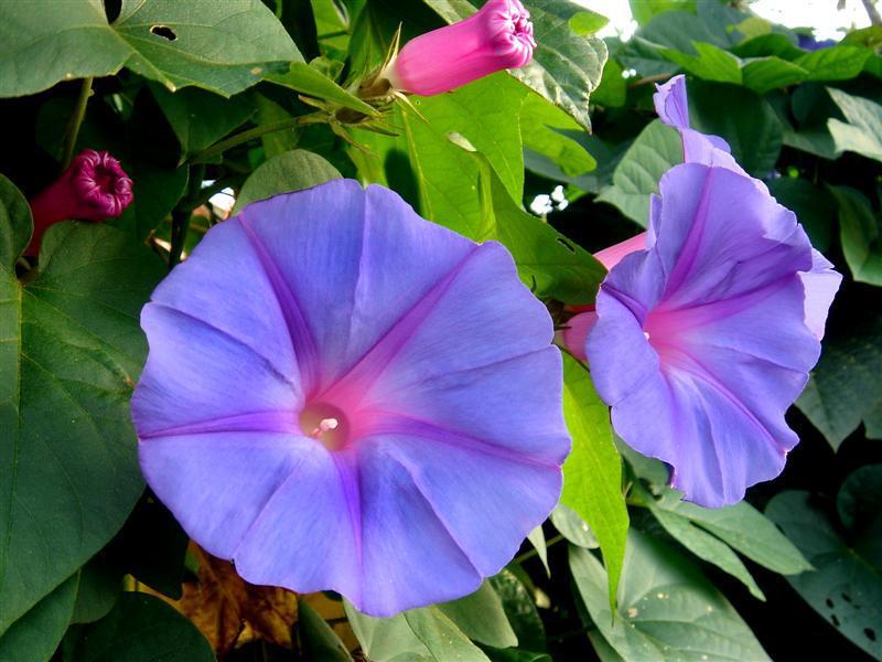 flores con campanillas