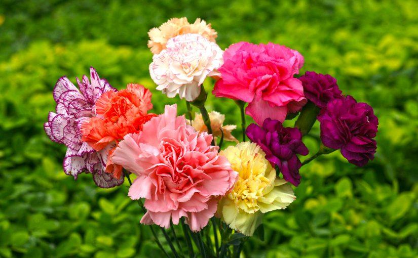 flores artificiales claveles