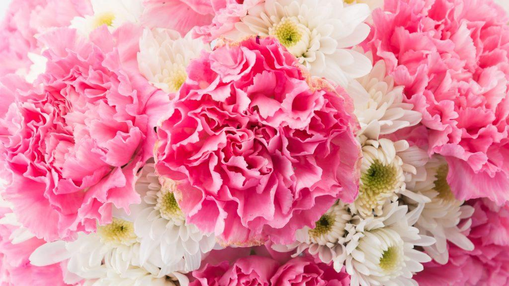 flores claveles y rosas