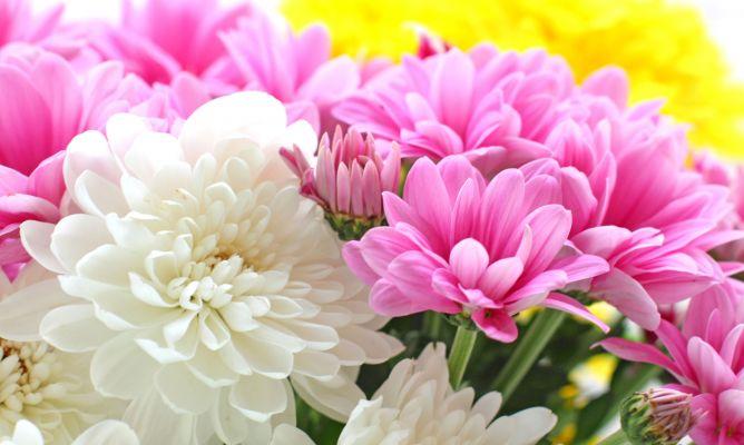 flores de bach crisantemo