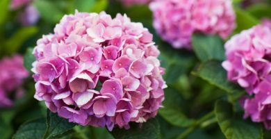 flor hortensia artificial