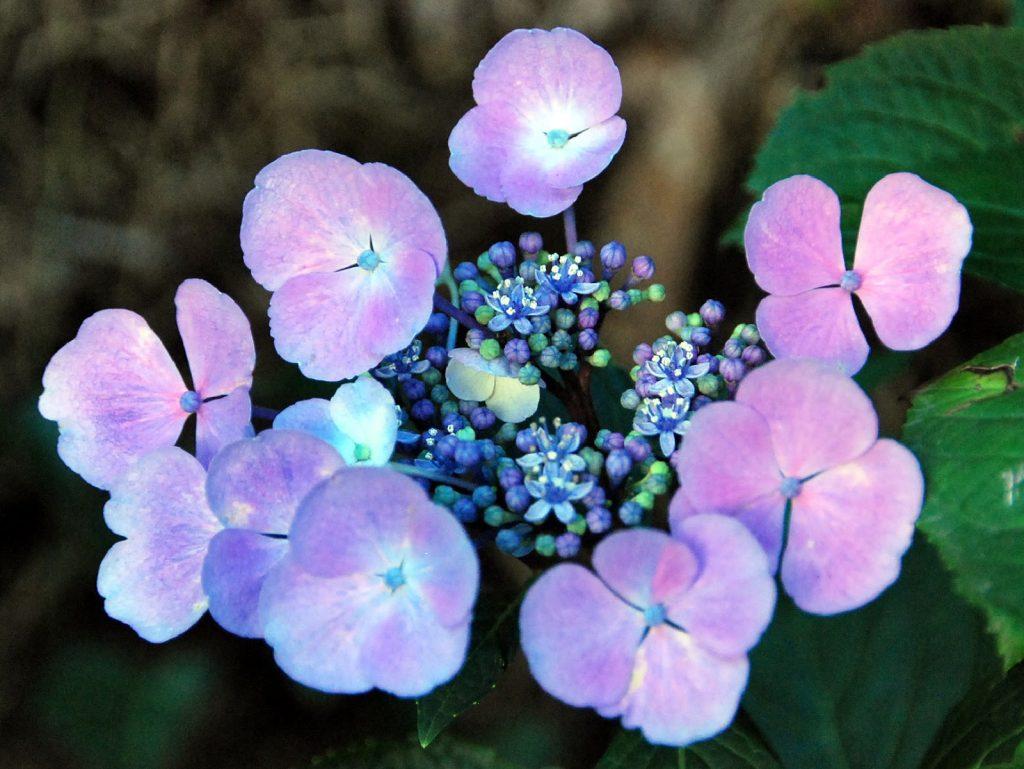 comprar flor hortensia artificial