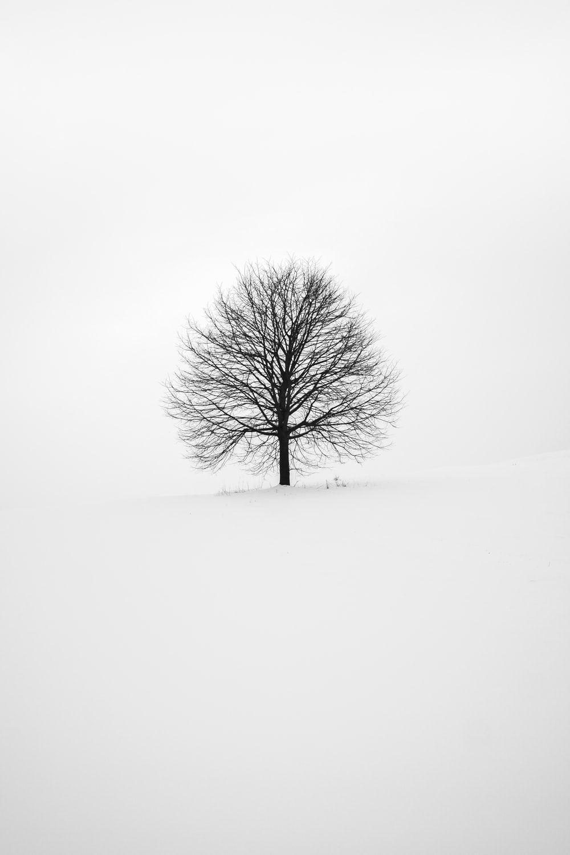 Fondo de pantalla minimalista blanco
