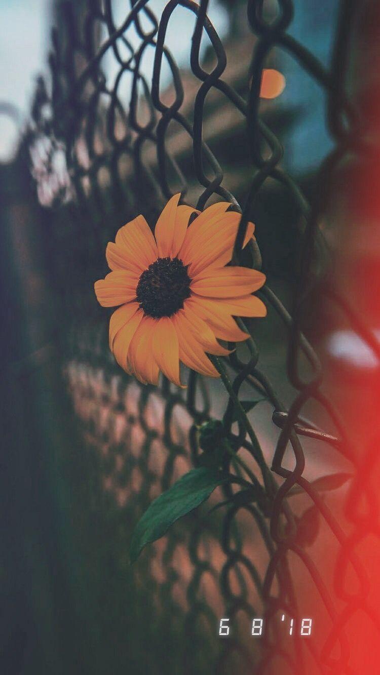 Fondos de pantalla aesthetic tumblr
